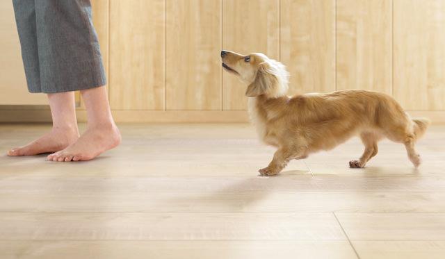 犬用フローリング